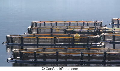 Fish farm in the Bay of Kotor. Montenegro,