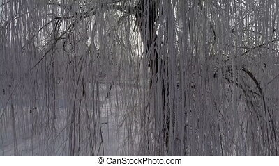 Panorama tree branches in the snow, the sun is shining into...