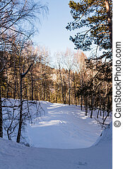 winter road in the woods - Winter road to the ski slopes in...