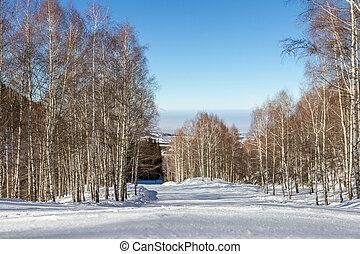 Empty snowy trail through the birch grove - empty snow ski...