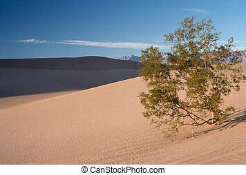 Mesquite Tree in Sand Dunes, Death Valley, California