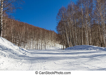 trail for skiers through birch grove - empty track for...