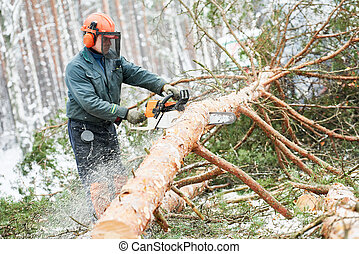 Lumberjack cutting tree in snow winter forest - Wood...