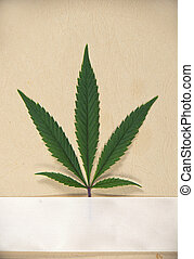 Single cannabis leaf isolated over textured paper with cream...