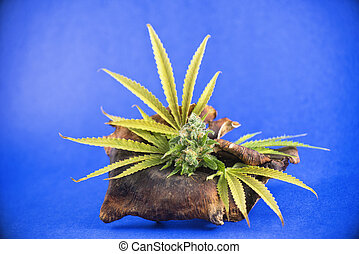 Cannabis flowers arrangement (black russian strain) with pot...