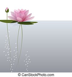 Waterlily on the water. Vector illustration for invitation,...