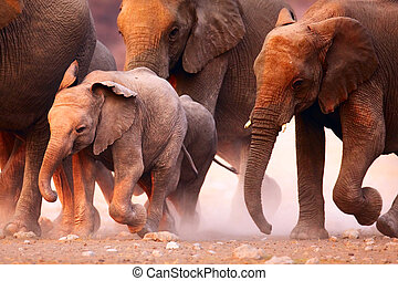 Elephants herd running - Elephant herd on the run in Etosha...