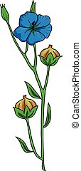 flax - Blossoming branch of flax with buds on a white...