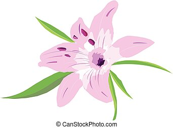 flower - A full-blown bud pink lily on a white background.