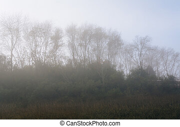 Trees in fog at the Memorial Waterfront Park in Mount...