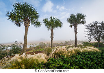 Palm trees and wetland along the Cooper River at the...