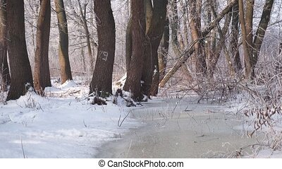 Frozen Water Flow in Forest - Sunny winter day shot of...