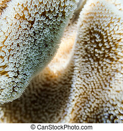 Closeup of Soft Coral Polyps at Great Barrier Reef