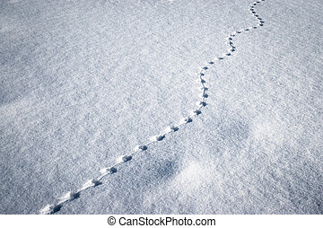 line of small animal tracks in the snow - winter background...