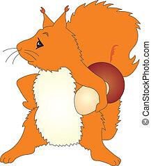 Squirrel vector - squirrel vector