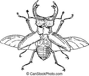 Stag beetle, vintage engraving.