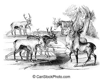 Trick of the Florida Indians to kill deer, vintage engraving.
