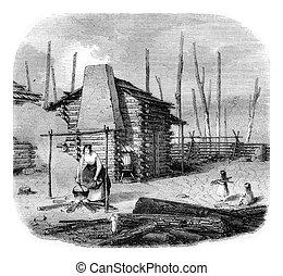 capanna, vendemmia, americano, pionieri, incisione