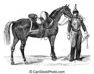 Horse Warmblood of cavalry, vintage engraving. - Horse...