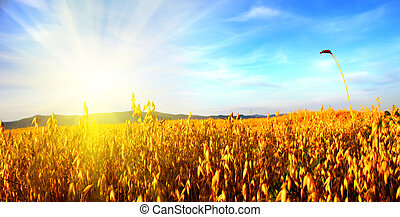 Sunrise in the field. Russia, Altai