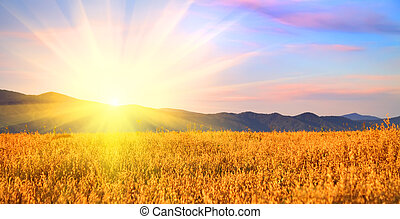 Sunrise in the field. Russia, Altai