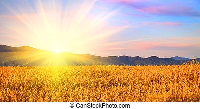 Sunrise in the field Russia, Altai