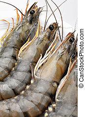 Prawn - Raw tiger prawns on a white plate