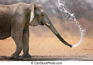 Elephant throwing water - Little elephant spraying water;...