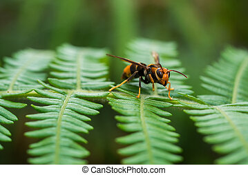 Wasp on tree in tropical forrest