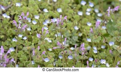 Henbit flowers in front of pale blue blurs