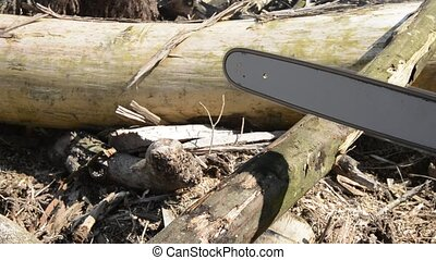 Chainsaw cutting a broad leaved tree log