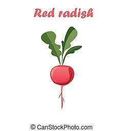 vector illustration of red radish
