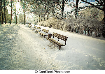 Benches in the park in the winter - Aley in the winter...