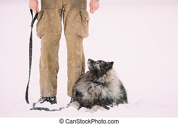 Funny Keeshond Dog Sit Near Owner Outdoor In Snow. Winter Season