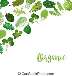 Organic banner with salad leaves - Organic banner with salad...