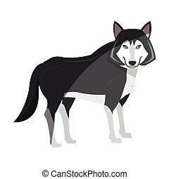 wolf cartoon icon over white background. colorful design....