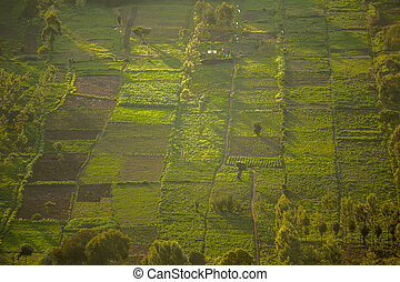 Small squared fields at sunset, Great Rift Valley, Kenya,...