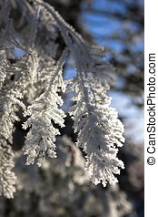 Close up of heavy frost on tree.