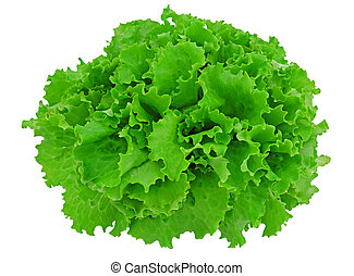 Green lettuce - Leaves of a green lettuce on the white...