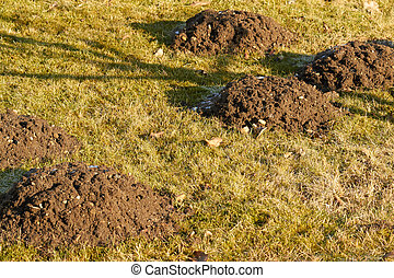 molehill - On a meadow are some big mole hills.