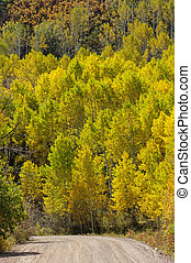Country Road Past Yellow Aspens - a country road curves past...