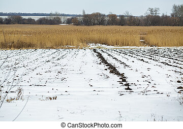 Agricultural field under the snow. winter season