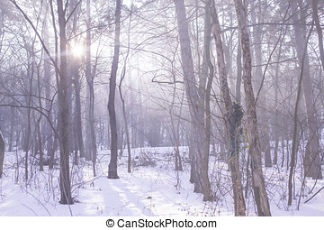 Winter cold forest