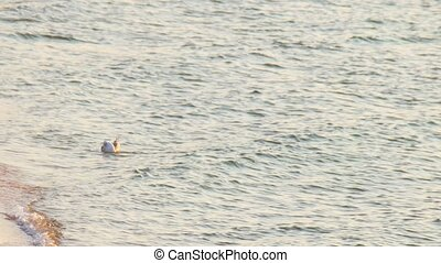 Alone seagull swimming peacefully on the sea water sunset light