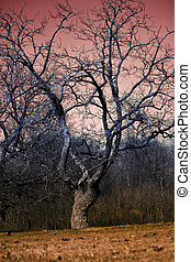 horror tree - eerie landscape with tree during autumn dusk