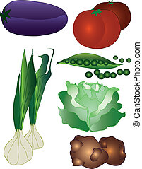 Collection of vegetables - Collection of different...