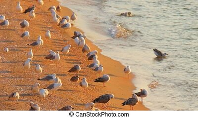 Birding concept. Many seagulls on sandy beach - Birding...