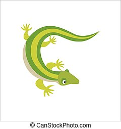 Chinese water dragon lizard vector illustration. - Chinese...