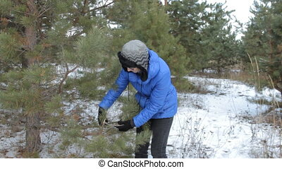 Woman in glasses cuts off spruce branches by pruner. Ft the...