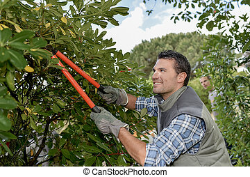 Trimming an overgrown tree